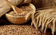 Закупаем зерно фуражное(пшеница,  ячмень,  тритикале,  кукуруза)