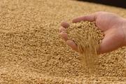 Закупаем зерно фуражное.