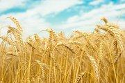 Зерно фуражное оптом