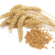 закупаем пшеницу,  большие объемы. оплата сразу.