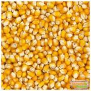 зерно фуражное ( кукуруза)